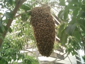 bee-swarm[1]