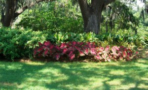 Shaded areas planted with tolerant plants. Photo: Southeast Garden