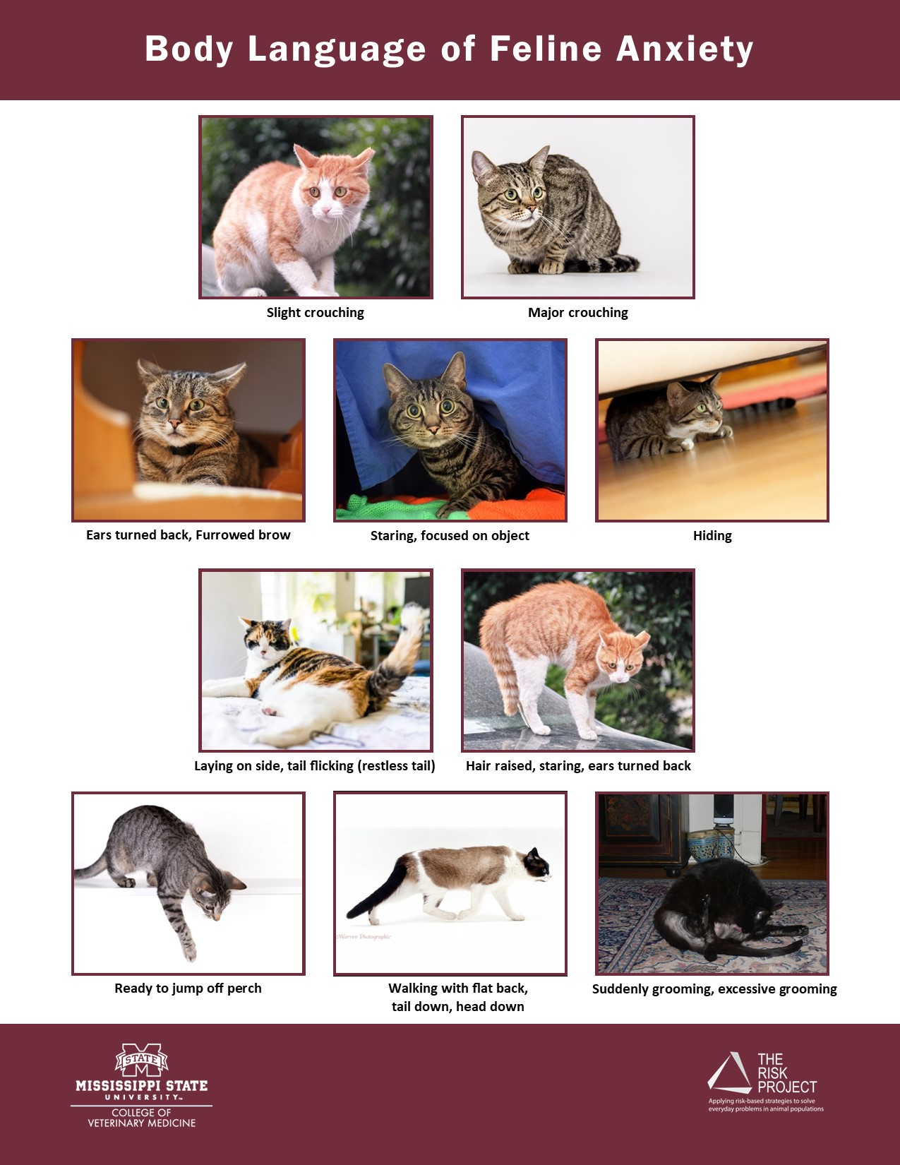 Handout with images/descriptions of what Anxiety in Feline looks like
