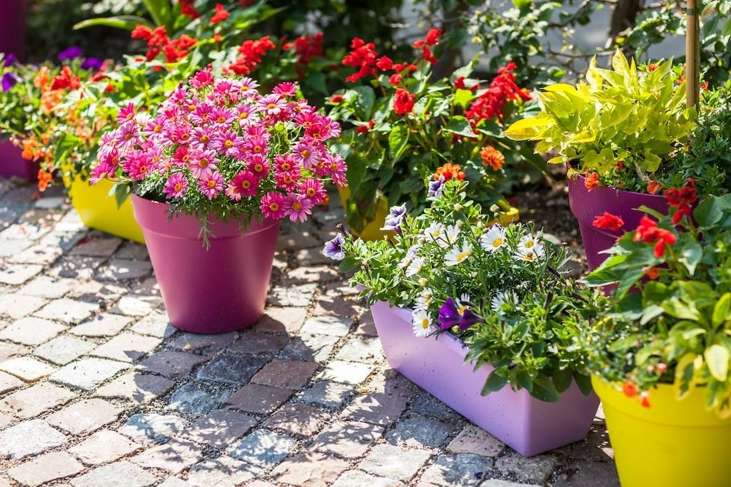DIY: Spring Container Gardens-4/19 | Mississippi State Trial Gardens