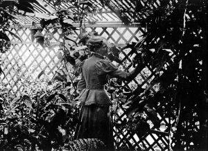 Theodosia Shepherd in her garden.
