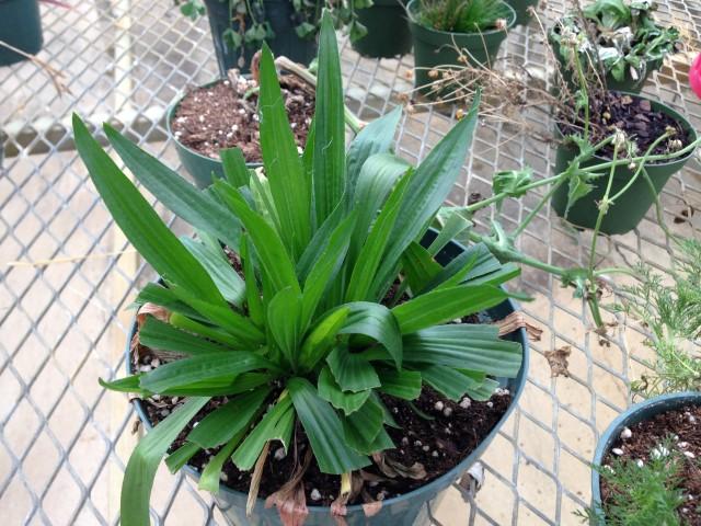 Greenhouse pics (1) (Small)